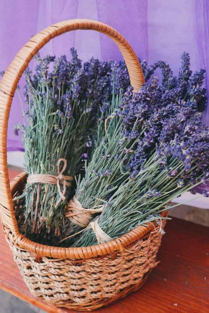 aroma basket beautiful flowers blooming